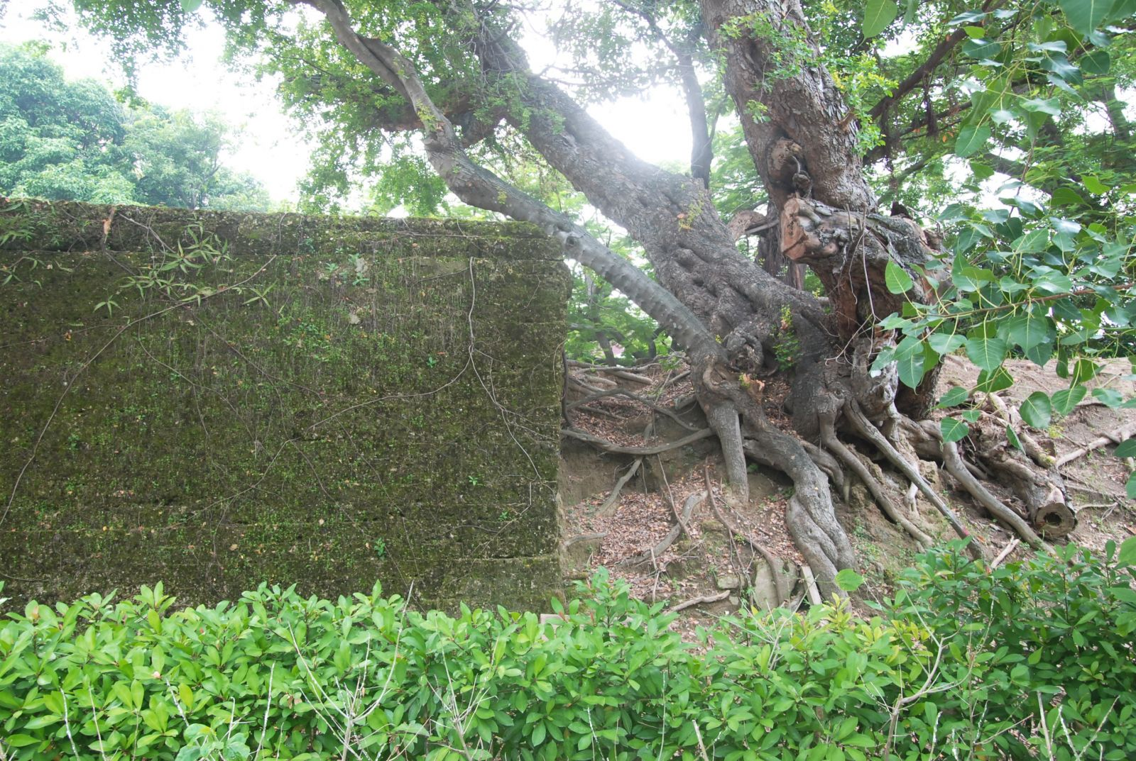 Little east gate of tainan wan restoration